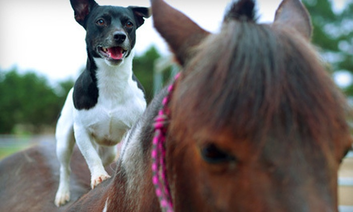 Mending Fences Equine Wellness - Oakham: Mending Fences Equine WellnessCanine or Equine Massage at Mending Fences Equine Wellness (Up to 53% Off)