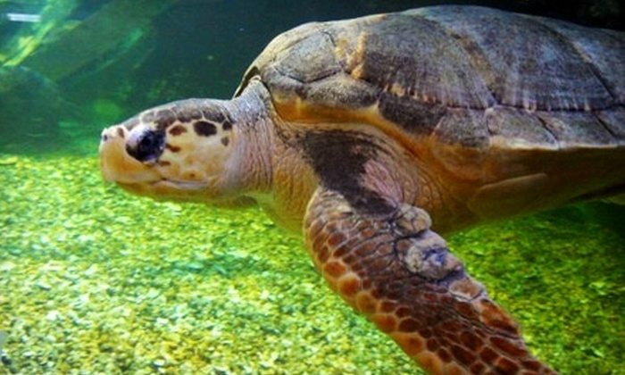 Atlantic City Aquarium - Atlantic City: $8 for Two Admission Tickets to Atlantic City Aquarium