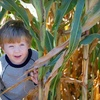 Up to Half Off Family Dairy Farm Tour in Cambridge
