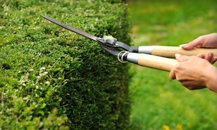 A Cut Above Lawn & Landscape - Lubbock: $15 for $30 Toward Lawn Services from A Cut Above Lawn & Landscape