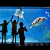 $110 Off Aquarium and Zoo Family Membership
