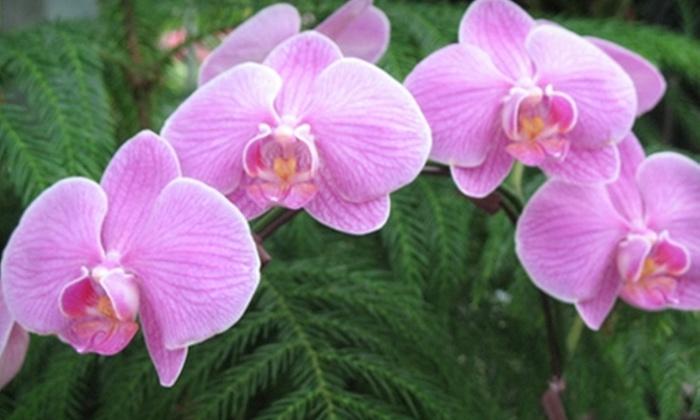 Cedar Rim Nursery - Langley: $15 for $40 Worth of Plants and More at Cedar Rim Nursery in Langley