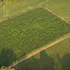$6 for Corn-Maze Outing in Gallatin