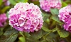 Green Glen Garden Center - New Lenox: Plants and Flowers at Green Glen Garden Center in Joliet (Up to 55% Off). Two Options Available.