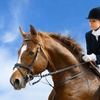 Up to 52% Off Horseback-Riding Lessons