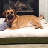 Orthopedic Pillow Top Mattresses for Dogs
