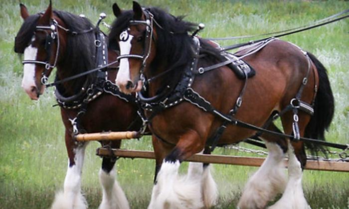 Tender Grass Carriage - Estes Park: $30 for a Horse-Drawn Wagon Ride for Two from Tender Grass Carriage ($60 Value)
