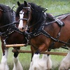 Half Off Horse-Drawn Wagon Ride for Two