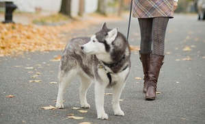 Wasilla Pet Care: Five Dog Walks from Wasilla Pet Care (55% Off)