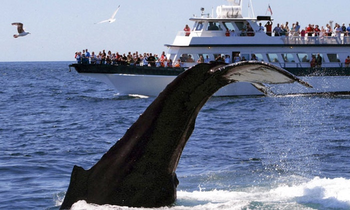 Plymouth Whale Watch - Mayflower II State Pier: $28 for a Whale-Watching Tour from Plymouth Whale Watch ($44 Value)