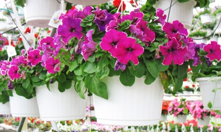 Hanging Plants and Patio Pots at Huizenga Brothers Greenhouses and Garden Center (50% Off)