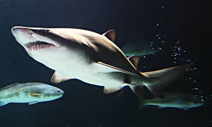 Sea Life Minnesota Aquarium In Bloomington Mn Groupon