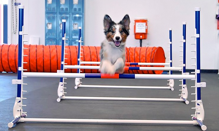 Dog training and playgroups zoom room groupon