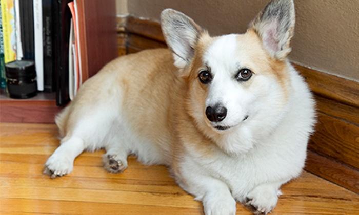 Lifetime Lookback: $39 for One Online Pet Tribute Page from Lifetime Lookback ($129 Value)