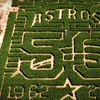 $6 for Corn Maze and Pumpkin Patch at P-6 Farms
