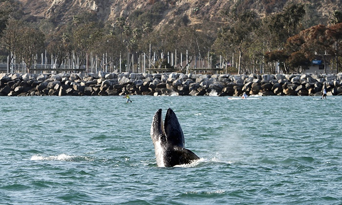 Dana Wharf Whale Watching - Dana Point: Two-Hour Evening Whale-Watching Cruise for One, Two, or Four from Dana Wharf Whale Watching (Up to 52% Off)