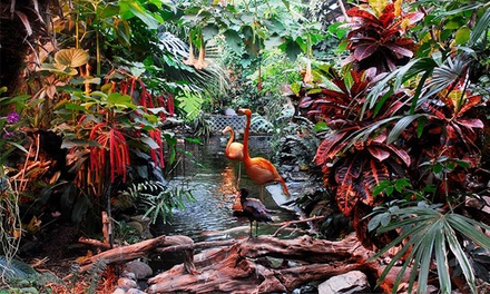 Entry for Two People or One Family at The Butterfly Gardens (Up to 51% Off)