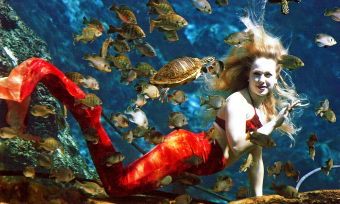 Newport Aquarium - Newport Aquarium: Entry to Mermaid and Pirate Family Ball at Newport Aquarium