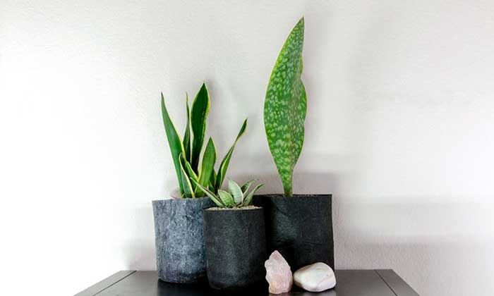 Air-Purifying Succulents Class - 5ing: Plant Air-Purifying Succulents that Render Health Benefits