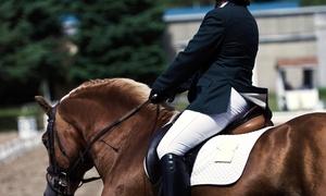 Sugar Magnolia Farm: One or Four 60-Minute Private Horseback Riding Lessons at Sugar Magnolia Farm (Up to 58% Off)
