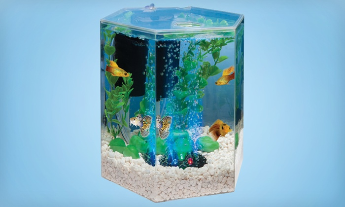 Tetra 1-Gallon Bubbling LED Desktop Aquarium Kit: Tetra 1-Gallon Bubbling LED Desktop Aquarium Kit. Free Shipping and Returns.