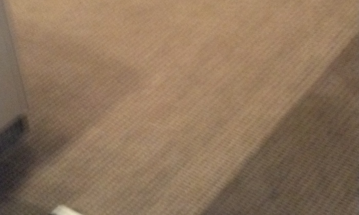 Elite Carpet & Upholstery Cleaners - Philadelphia: $100 for $125 Worth of Rug and Carpet Cleaning — Elite Carpet Cleaning
