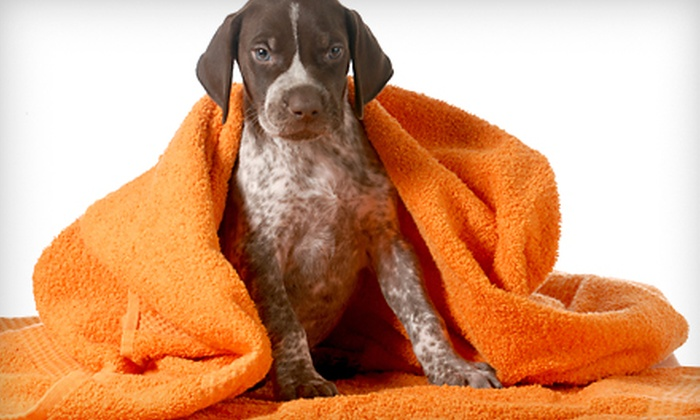U Lucky Dog - Globeville: Spa Package for a Small, Medium, Large, or Extra-Large Dog at U Lucky Dog (Up to 52% Off)