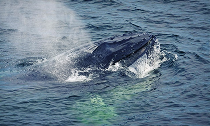 Newburyport Whale Watch - Newburyport: Whale-Watching Tour for One, Tour, or Four from Newburyport Whale Watch (Up to 43% Off)