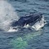 Up to 43% Off Newburyport Whale Watch Tour