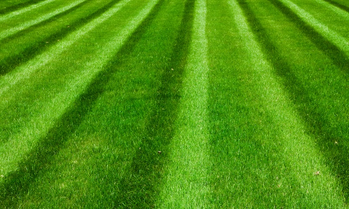 A Complete Lawn Care - Tampa Bay Area: $17 for $30 Worth of Lawn and Garden Care at A Complete Lawn Care