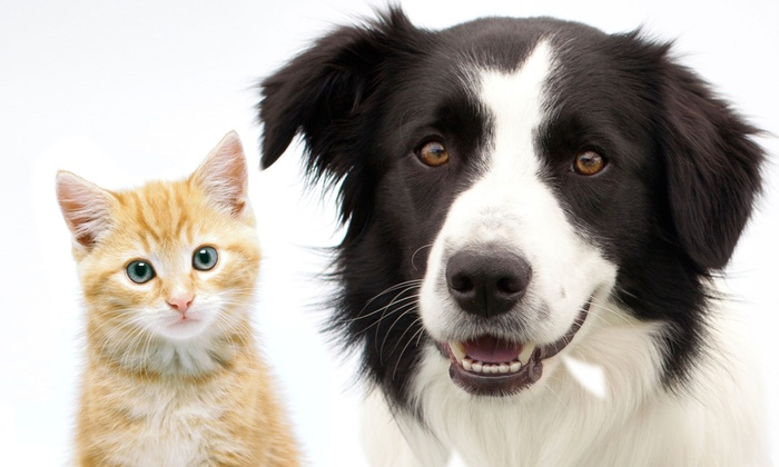 Tamiami Trail Animal Clinic - Westchester: Cat or Dog Wellness Exam or Annual Checkup with Vaccines at Tamiami Trail Animal Clinic (78% Off)
