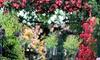 Plantas de rosas