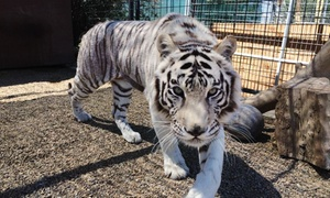 Up to 50% Off at Forever Wild Exotic Animal Sanctuary at Forever Wild Exotic Animal Sanctuary, plus 6.0% Cash Back from Ebates.