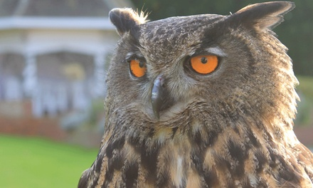 TwoHour Falconry Experience for One, Two or Four at Willows Bird of Prey Centre