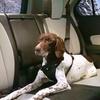 Easy-Comfort Pet Harness