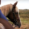 Up to 62% Off Horseback Trail Ride