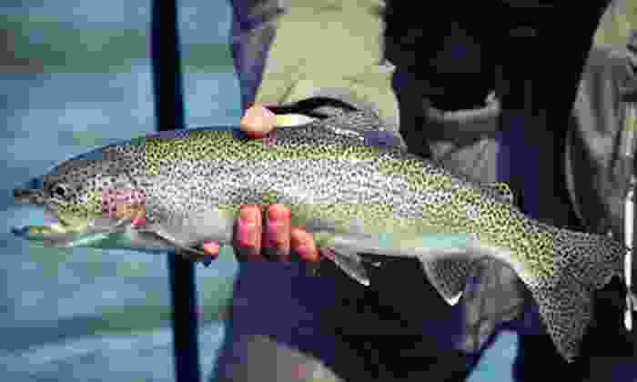 Pocono Fishing Adventures - Pocono Fishing Adventures: $179 for a Three-Hour Fishing Charter for Up to Six from Pocono Fishing Adventures (Up to $381.30 Value)