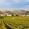 Visita a la bodega y cata de vino
