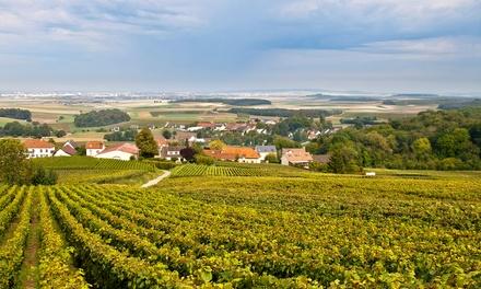 Visita guiada a la bodega y cata de dos vinos para 2, 4 o 6 personas por 9,90 € en Bodegas Briego