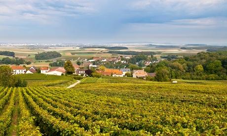 Visita guiada a la bodega y cata de dos vinos para 2, 4 o 6 personas por 9,90 € en Bodegas Briego Oferta en Groupon