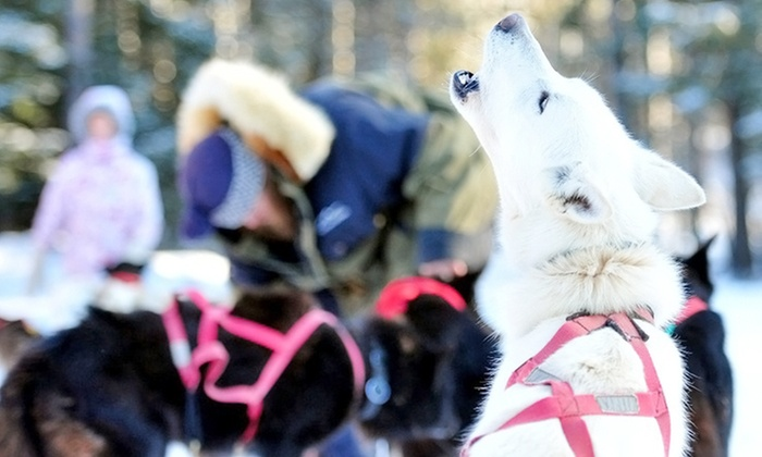 White Wilderness Sled Dog Adventures - White Wilderness Sled Dog Adventures: Weekday or Weekend Trip with Optional Yurt Escape from White Wilderness Sled Dog Adventures (Up to 50% Off)