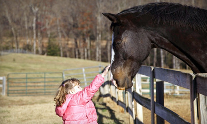 Mesa Vista Therapeutics - 1: One Family or Three Solo or Duo 60-Minute Horseback-Riding Lessons at Mesa Vista Therapeutics (Up to 71% Off)