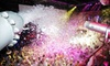 """Mike Anthony Entertainment Inc - Elektricity: VIP Access for Two or Four to Foamshow's """"Electric Foam"""" at Elektricity Nightclub on Sunday, June 30 (Up to 54% Off)"""