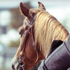 Up to 53% Off a Horseback-Riding Lesson