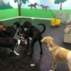 45% Off Doggy Daycare
