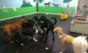 Precious Paws: Three Days of Doggy Daycare at Precious Paws  (45% Off)