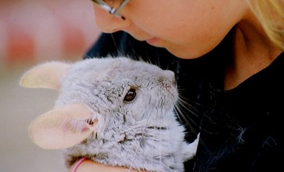 image for Animal Handling Experience for Up to Five at Animal Rangers (Up to 47% Off)
