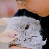 Animal Handling Experience