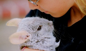 Animal Rangers: Animal Handling Experience for Up to Five at Animal Rangers (Up to 47% Off)