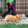 Up to 56% Off a Dog Walk or Pet-Sitting